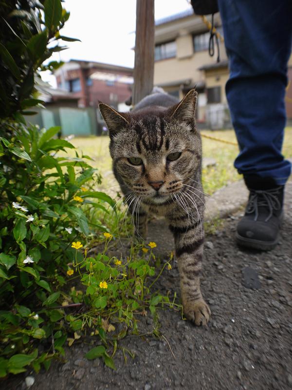 空き地と虎ロープとキジトラ猫3
