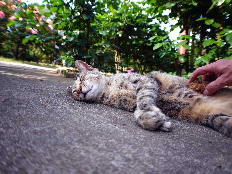 タワシとキジトラ猫2
