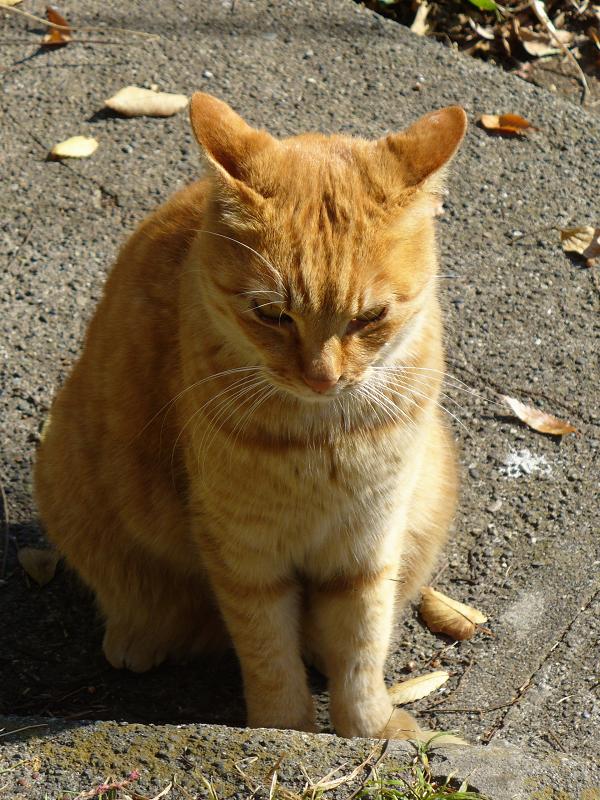 廃屋と茶白猫3