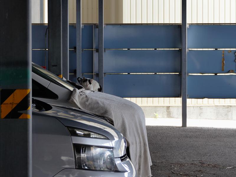 駐車場の車と白黒猫1