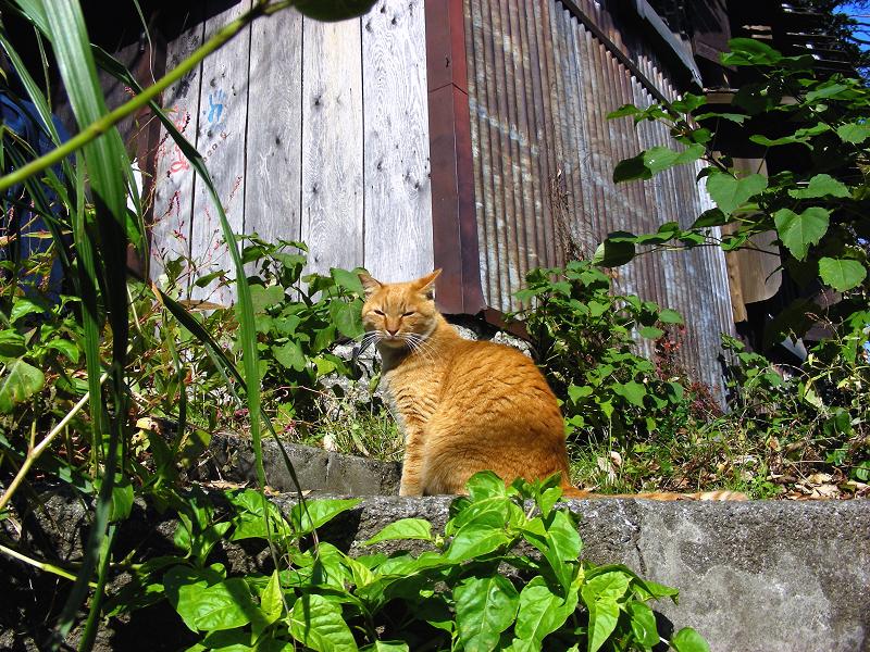廃屋横と茶白猫1