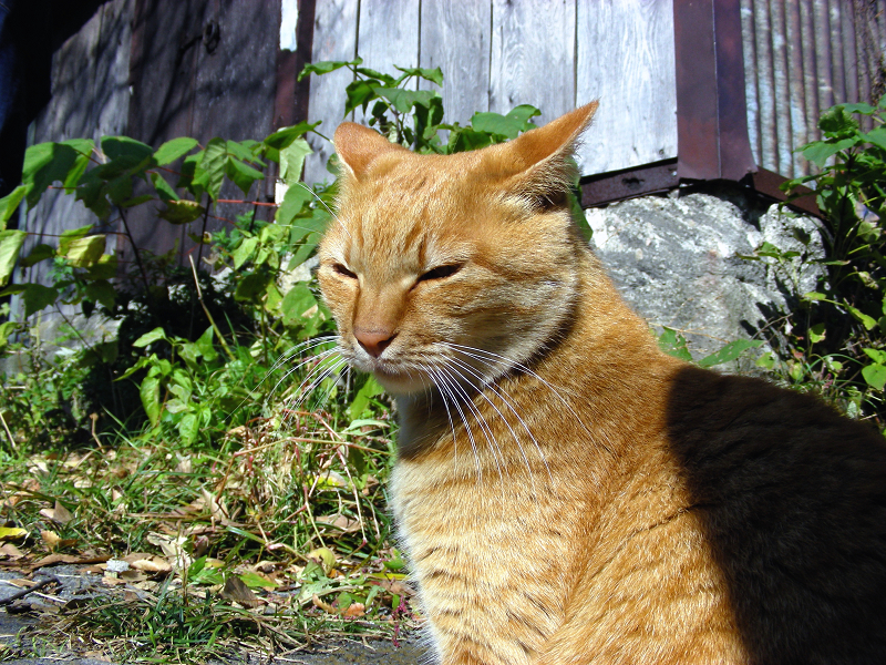 廃屋横と茶白猫3