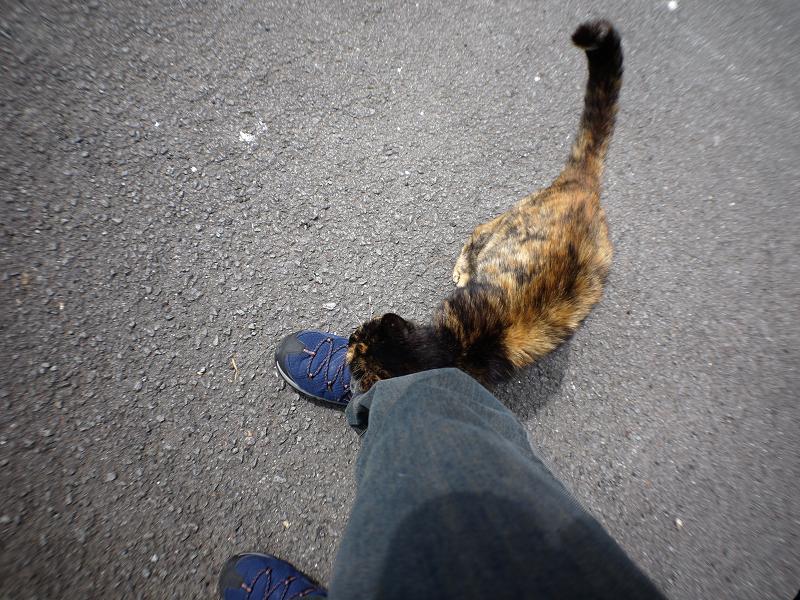 再会したキジトラ猫とサビ柄猫のコスコス1