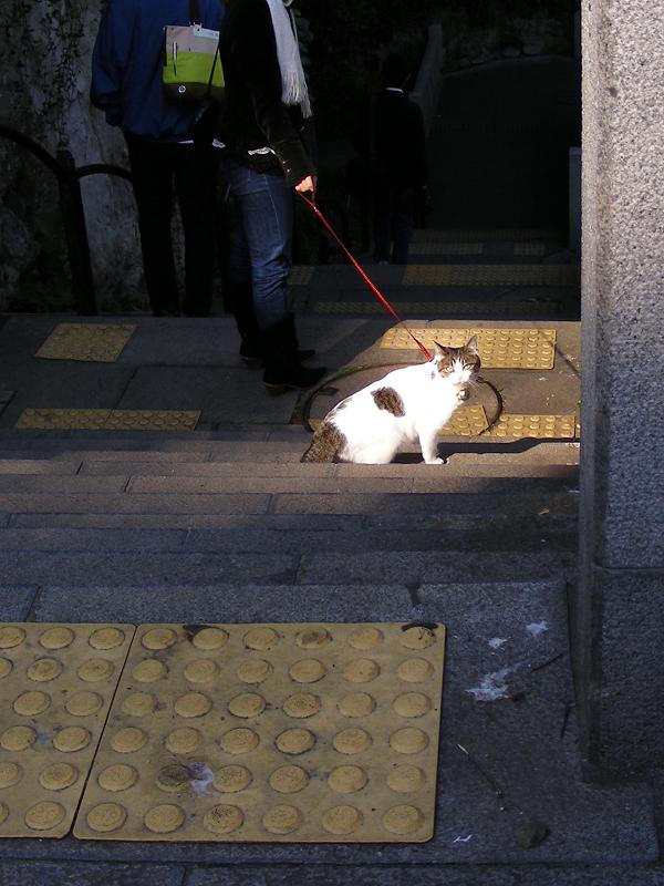 階段を降りていく首輪猫2