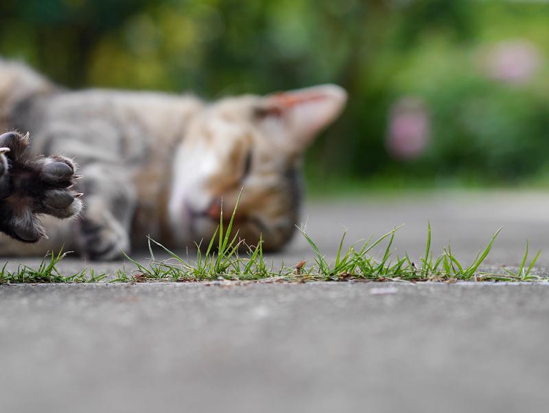 気持ちよさそうに寝ているキジトラ猫1