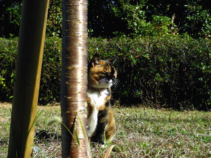 花壇の三毛猫2