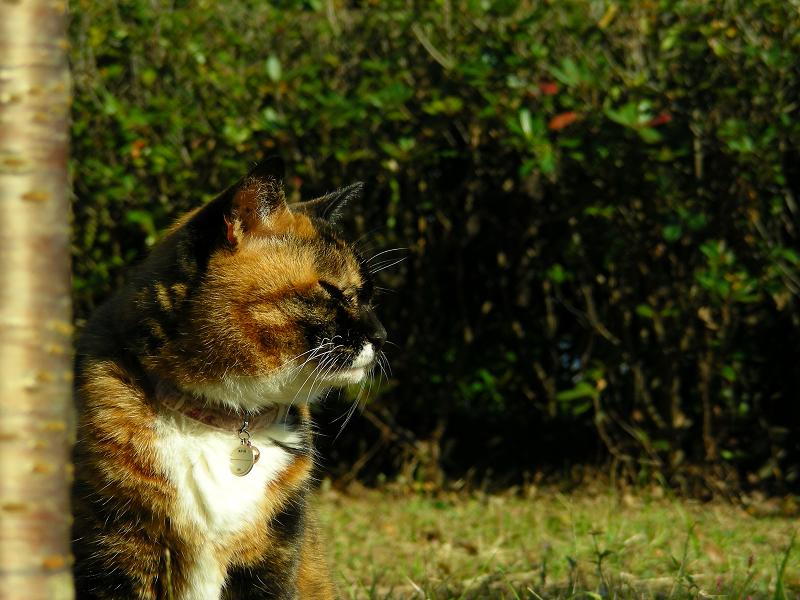 花壇の三毛猫3