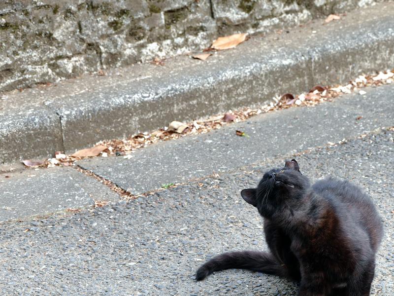 路上でカキカキする黒猫1