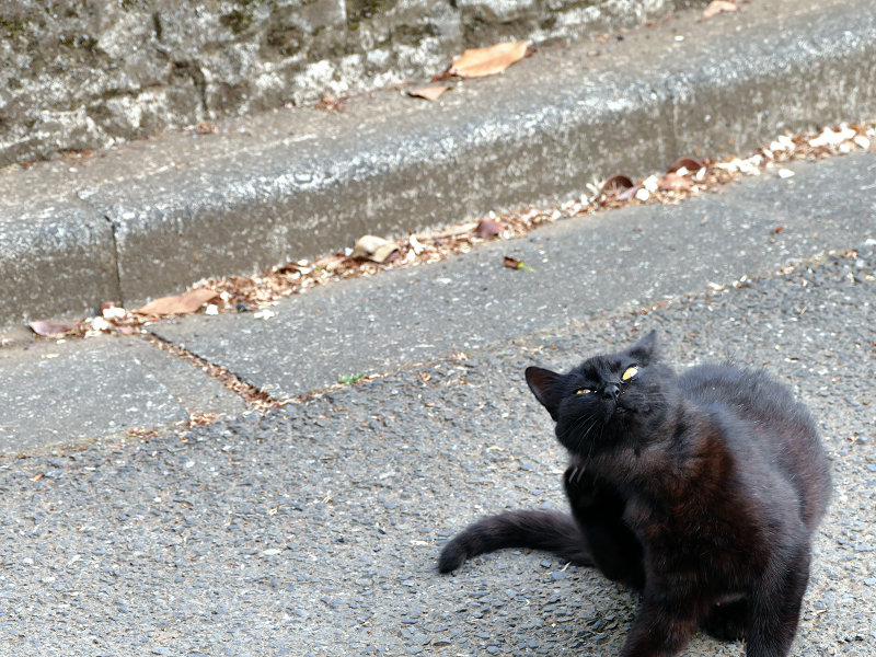 路上でカキカキする黒猫2