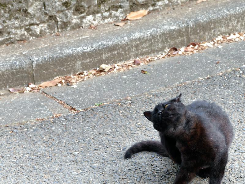 路上でカキカキする黒猫3