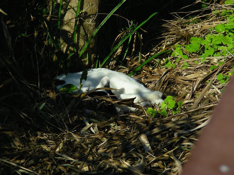 茂みと日向の猫1