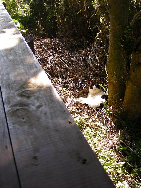 茂みと日向の猫2