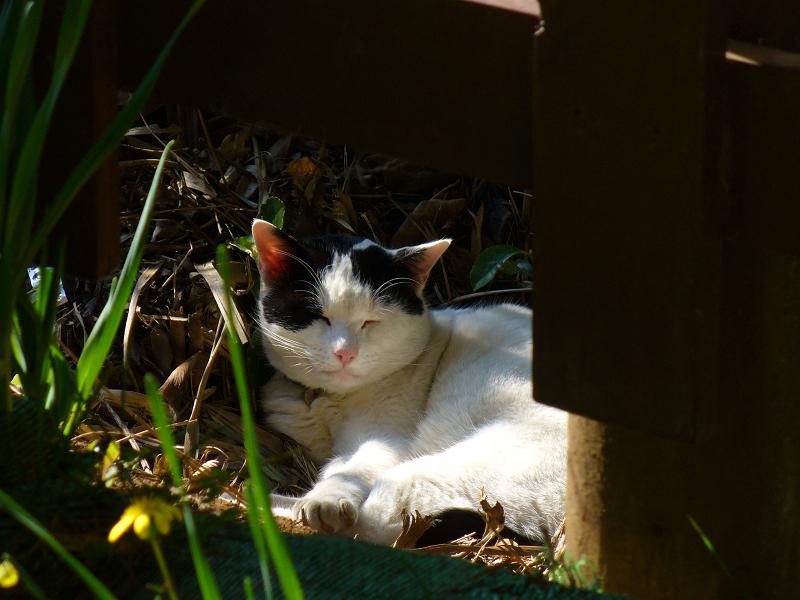 茂みと日向の猫3
