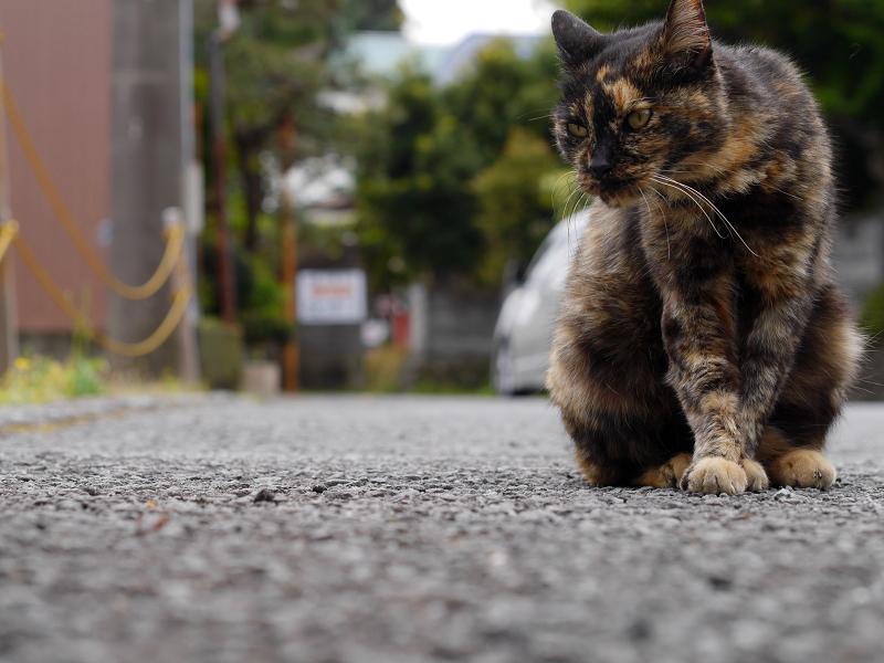路地上の猫2