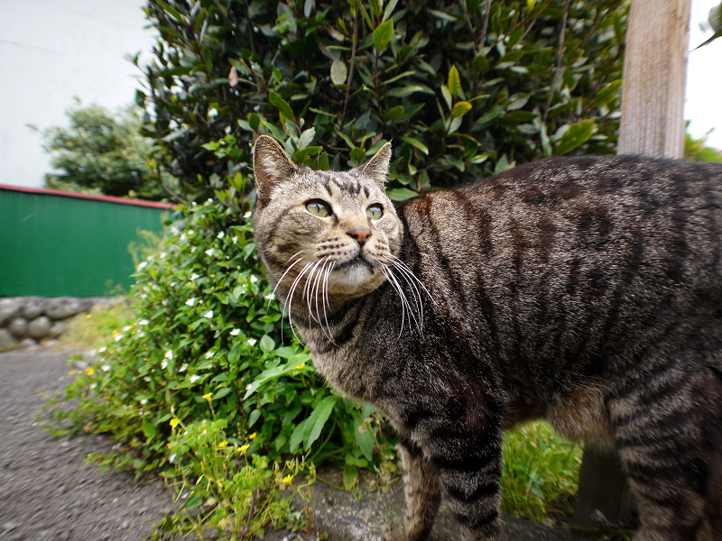 路地上の猫3