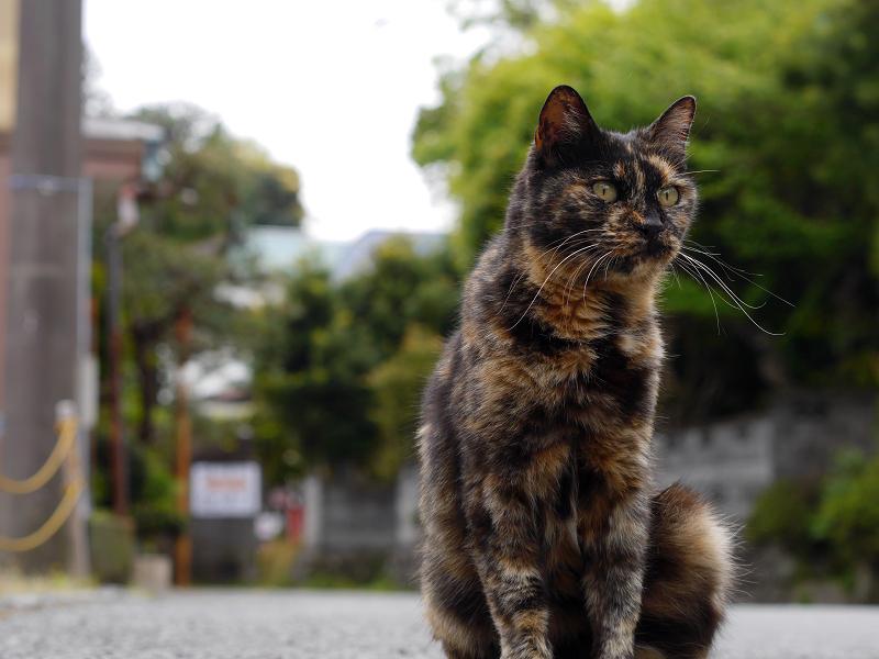 路地上の猫1