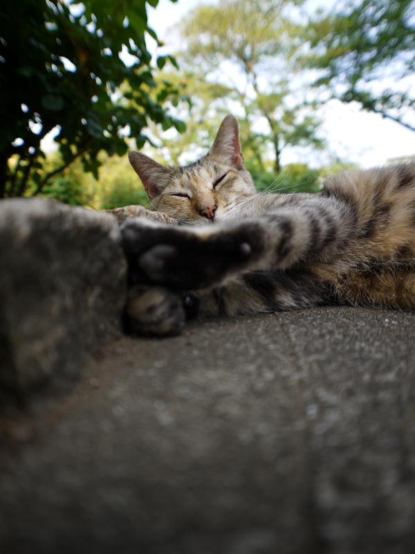 公園で寝ているキジトラ猫1