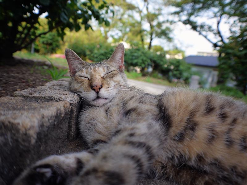公園で寝ているキジトラ猫2