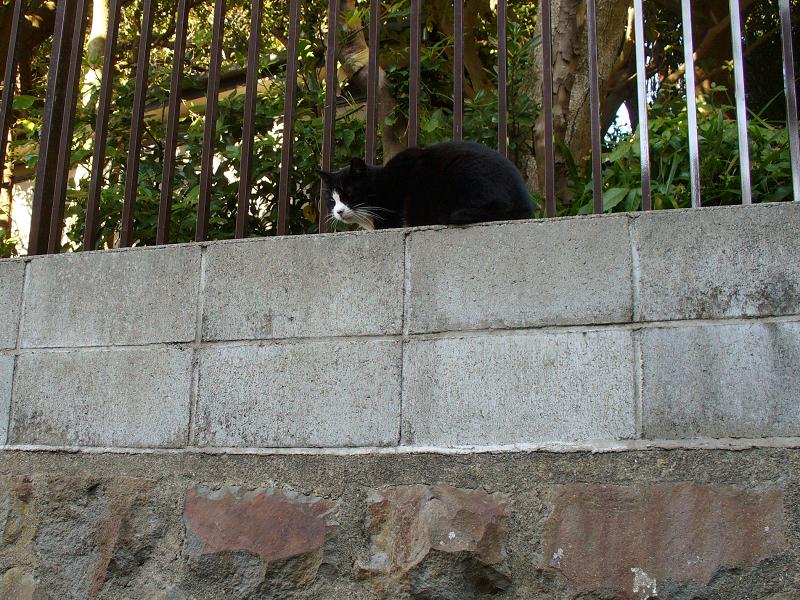 高い位置にいた黒白猫1
