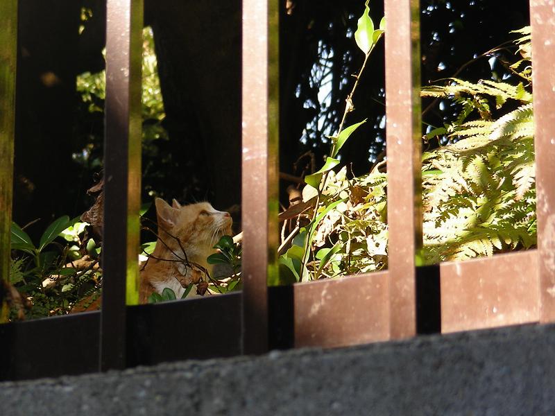 茂みから見上げている猫