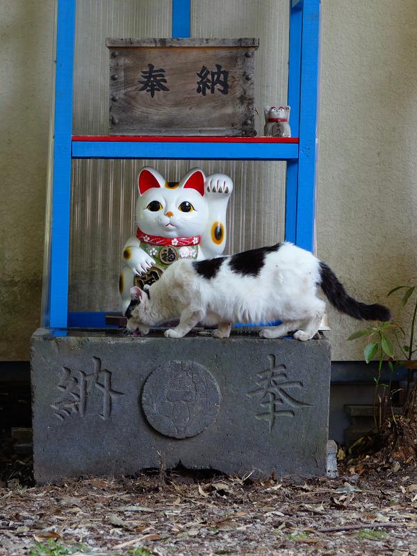 招き猫と白黒猫1