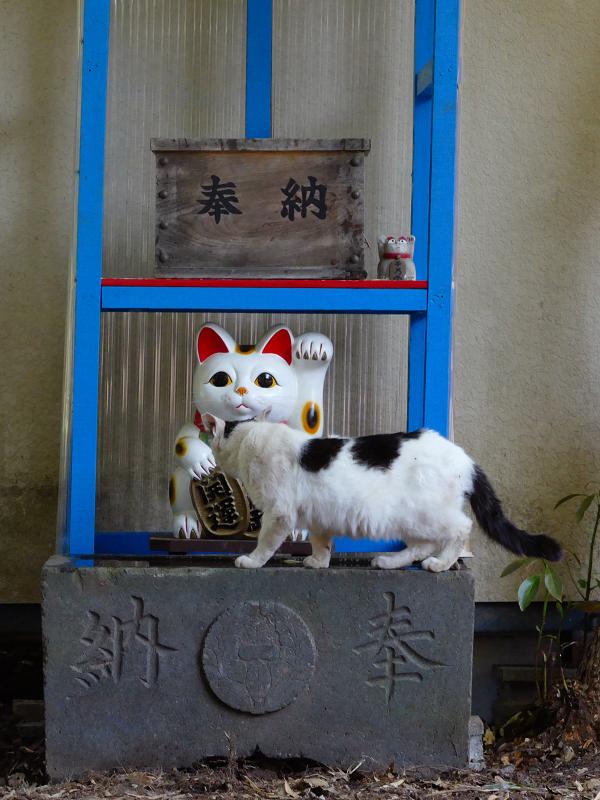 招き猫と白黒猫2