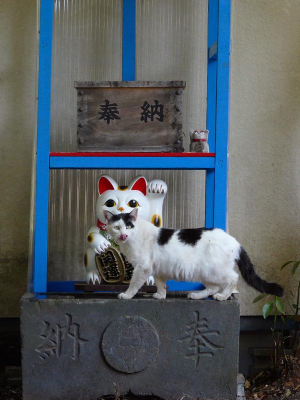 招き猫と白黒猫4