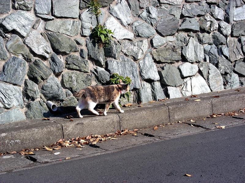 石垣とキジ白猫1