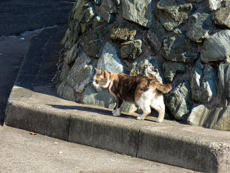 石垣とキジ白猫2