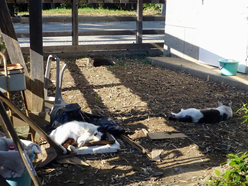 作の中の猫たち