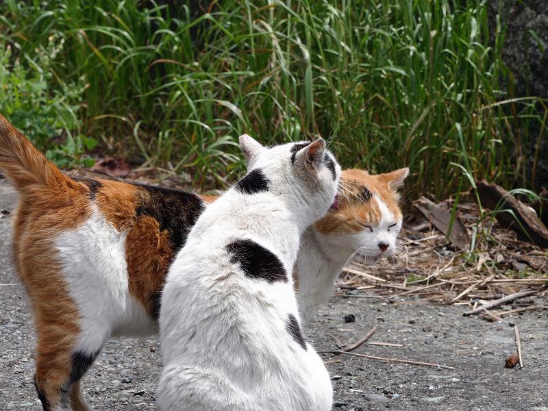 仲良しな白三毛猫と白黒猫1
