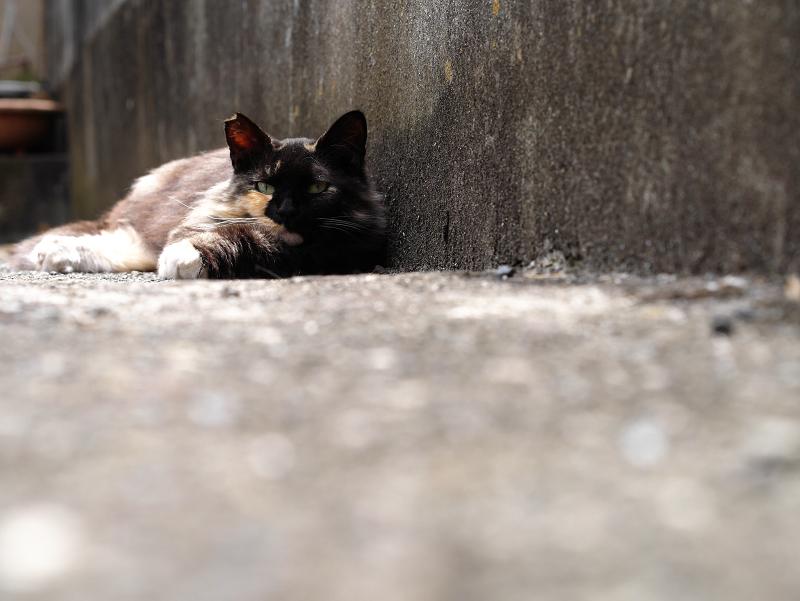 壁と毛長猫1