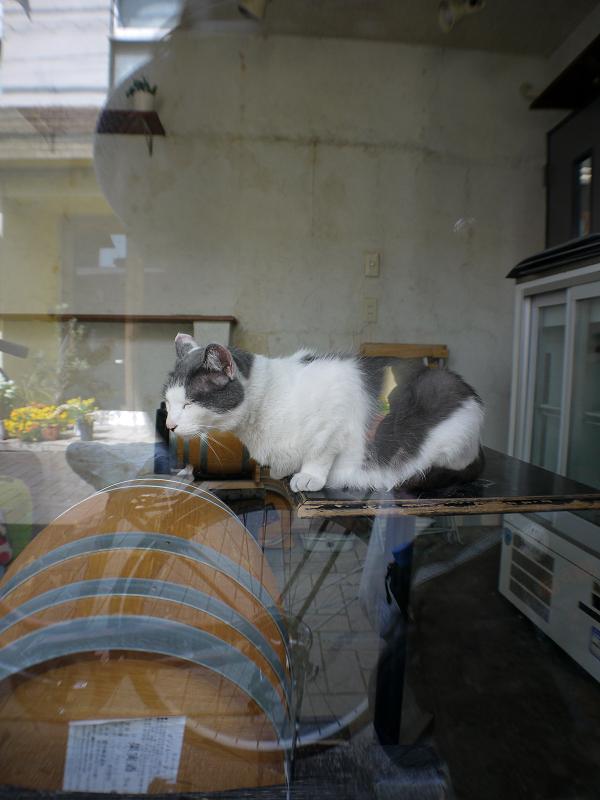 ガラス越しのキジ白猫1