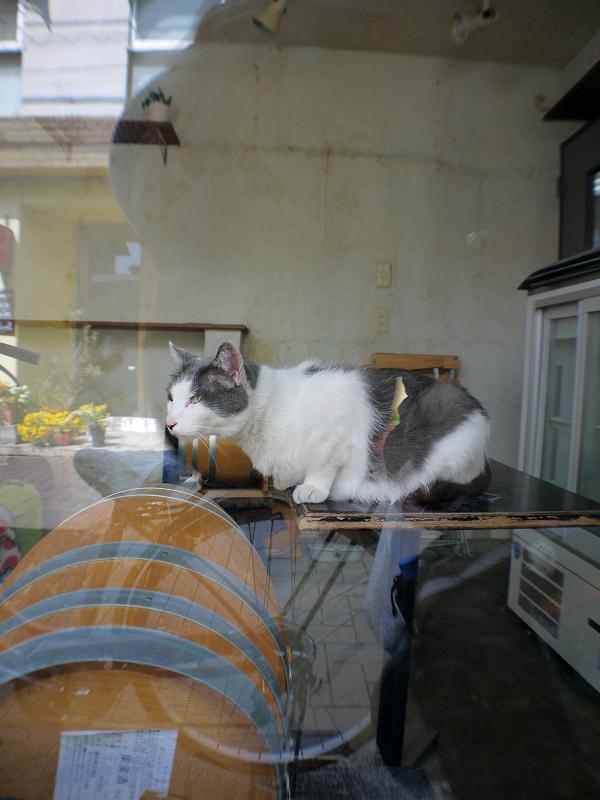 ガラス越しのキジ白猫2
