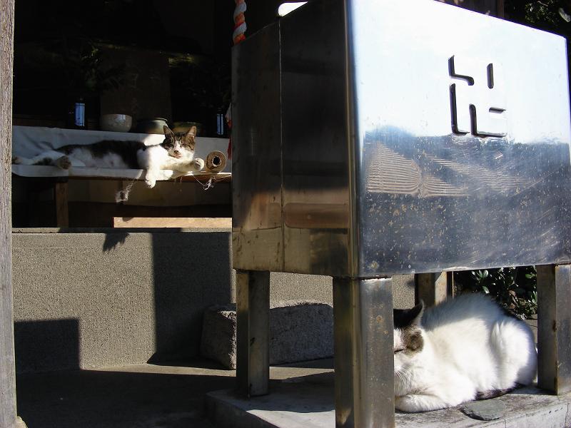 頭熱足寒な猫1
