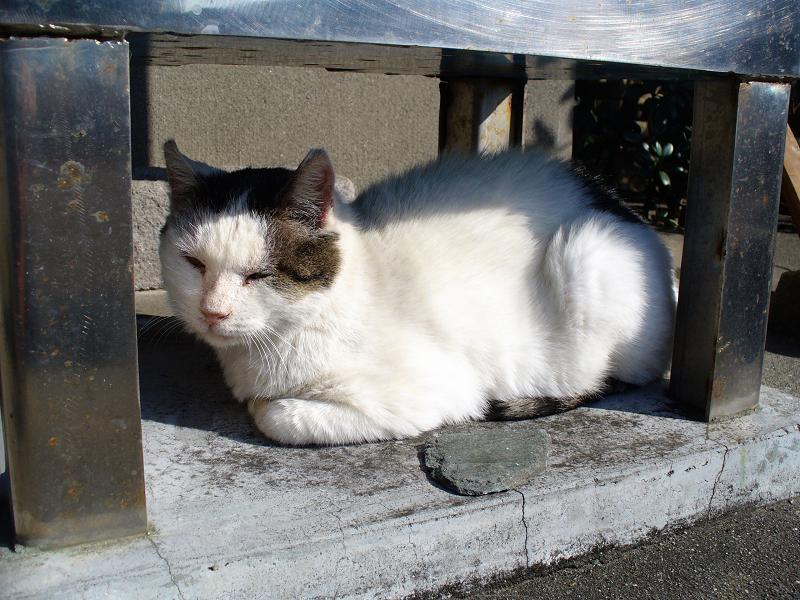 頭熱足寒な猫2