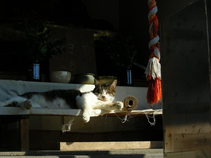 頭熱足寒な猫3