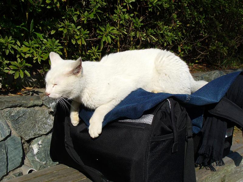 カメラバッグと白猫1