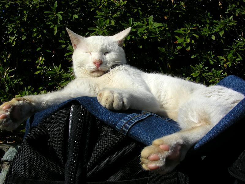 カメラバッグと白猫2
