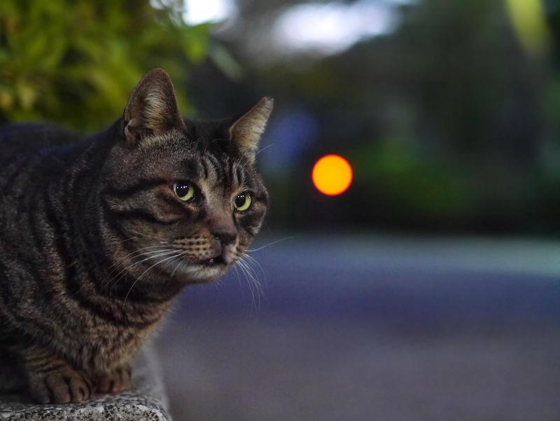 境内の猫1