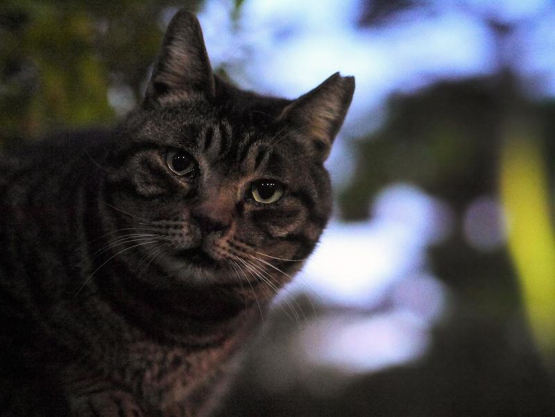 境内の猫2