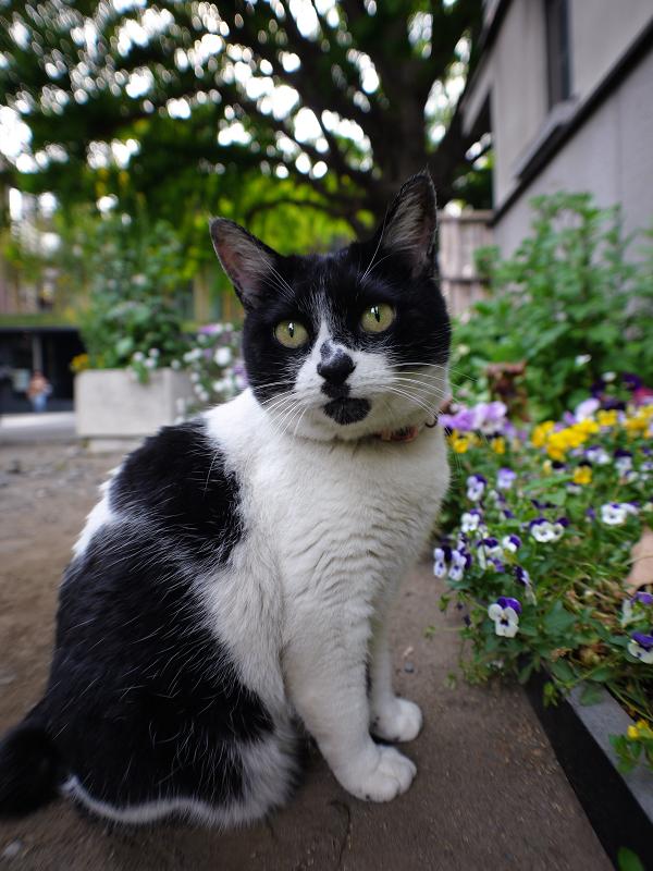 お寺の猫1