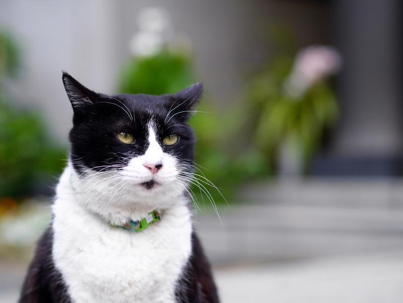 お寺の猫2
