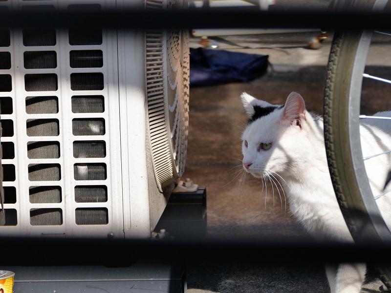 アパートの猫1