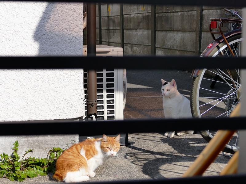 アパートの猫2