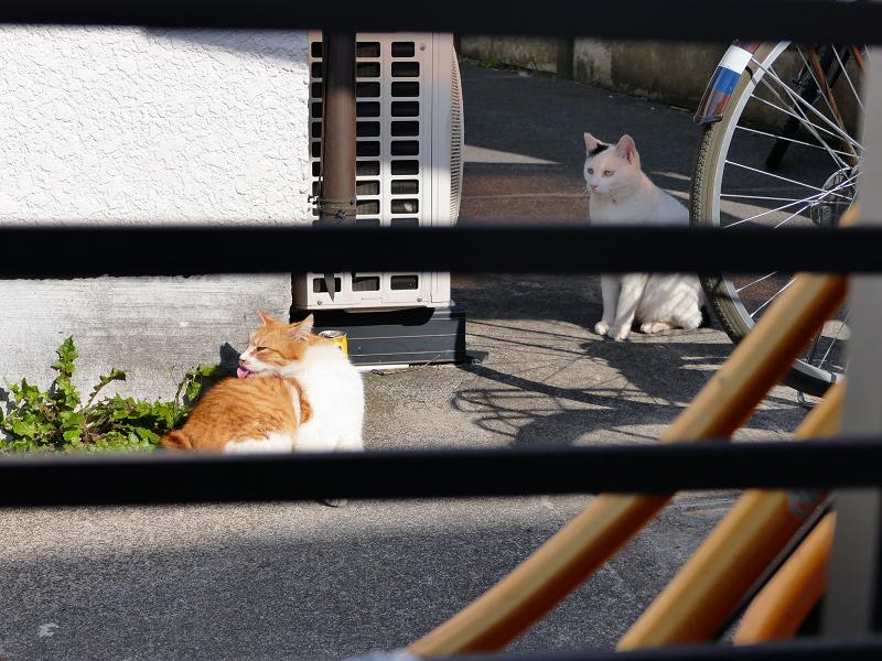 アパートの猫3