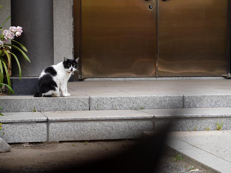 お堂の前の白黒猫