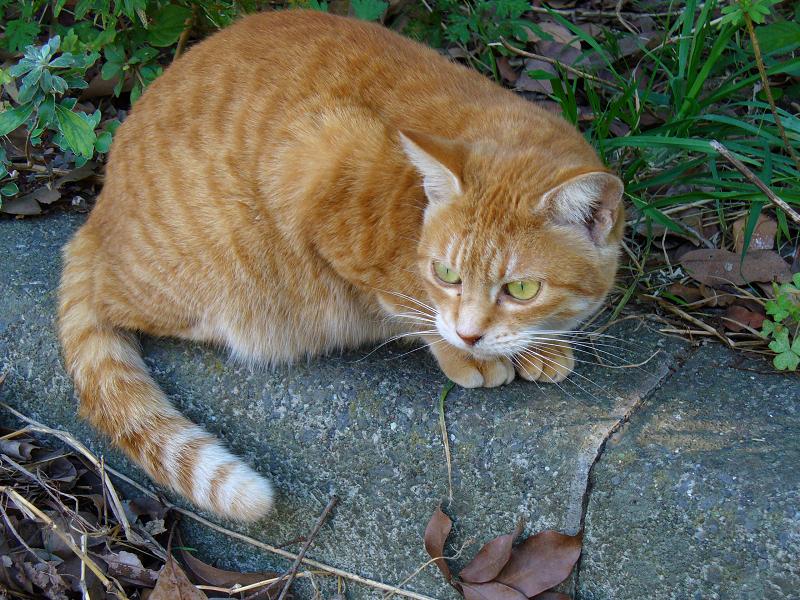 縁石に乗ってる茶白猫