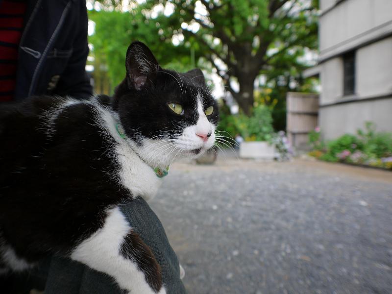 膝乗り黒白猫1