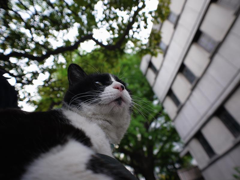 膝乗り黒白猫2